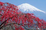 Япония – государство, расположенное на группе восточноазиатских островов в Тихом океане.